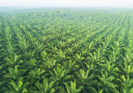 Foto de Arial view of palm plantation at east asia. - Imagen libre de derechos