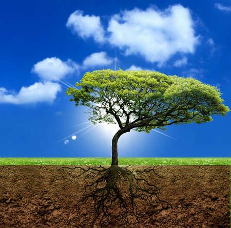 Photo pour Roots of the life - image libre de droit
