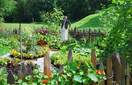 Vegetable garden with a scarecrow.