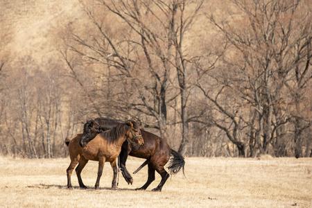 Photo pour two horse mating in the field - image libre de droit