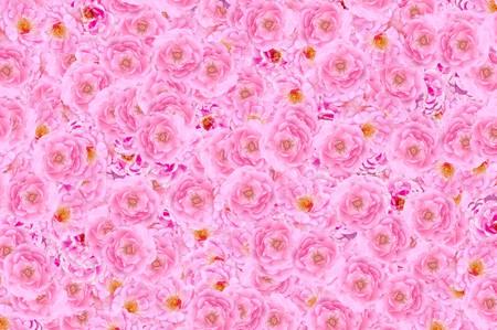 Photo for beautiful pink damask rose flower pattern background - Royalty Free Image