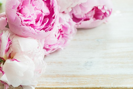 Photo for Fresh bunch of pink peonies on white wooden background. Card Concept, top view, copy space for text - Royalty Free Image
