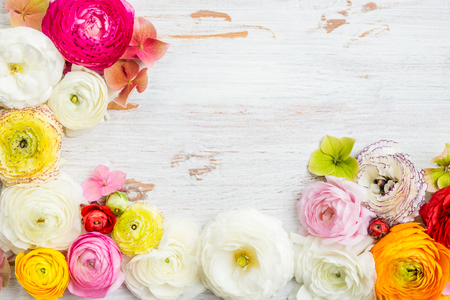 Photo pour Ranunculus Buttercup Flowers of different colours, Frame from heads of flowers, Spring or Mothers Day Concept, space for text, top view - image libre de droit