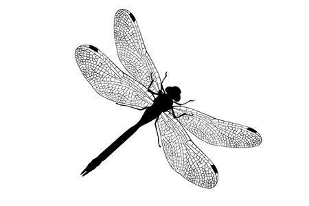 Photo for dragonfly  - Royalty Free Image