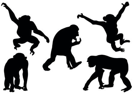 Collection of apes silhouettes
