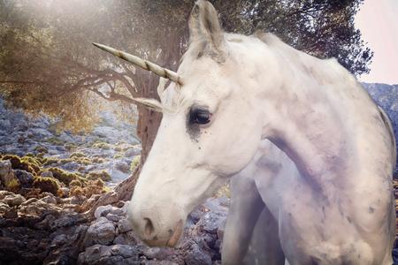 Photo pour Real unicorn walking in rocky land  - image libre de droit