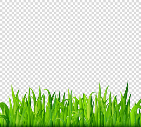 Illustration pour Green grass border on transparent background vector - image libre de droit
