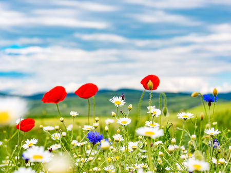 Photo pour Wildflowers field against blue sky - image libre de droit