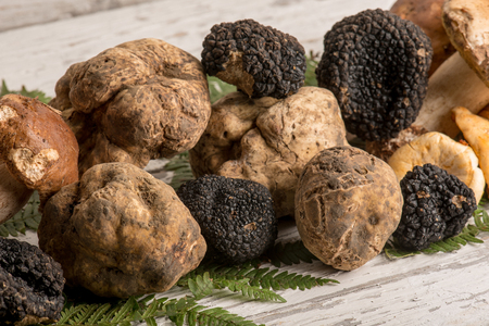 Photo for group of white  black truffle and mushroom - Royalty Free Image