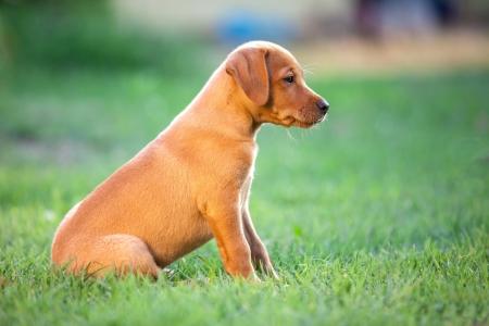 Puppy Sitting In the grass.