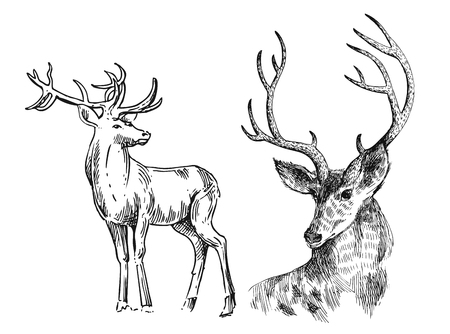 Hand drawn vector illustration sketch of deer.  Boho style. Use for scrapbook, tissue, textile, cloth, fabric, web