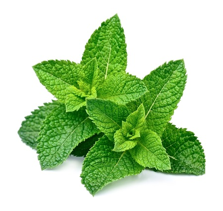 Photo for Mint leaf close up on a white background - Royalty Free Image
