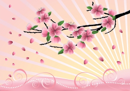 Blossom  cherry-tree. Vector  illustration.