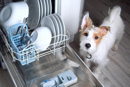 Foto de Dishwasher Dog - cute Jack Russell doggy with dishwasher mashine - Imagen libre de derechos