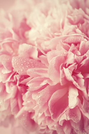 Photo for Abstract pink wedding flower background - Royalty Free Image