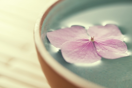 Photo for Close up of flowers floating in bowl of water - Royalty Free Image