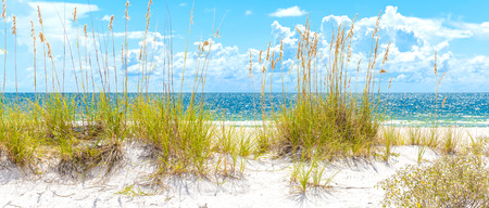 Photo for sunny St. Pete beach with sand dunes and blue sky in Florida - Royalty Free Image