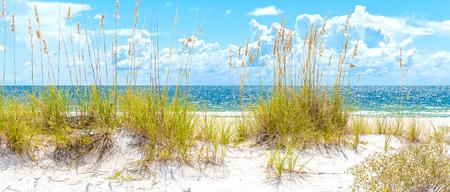 Foto de sunny St. Pete beach with sand dunes and blue sky in Florida - Imagen libre de derechos
