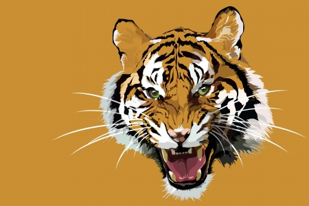 Close up of a beautiful Siberian Tiger.