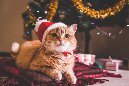 Photo pour Red cat wears Santa's hat lying under Christmas tree. Christmas and New year concept - image libre de droit