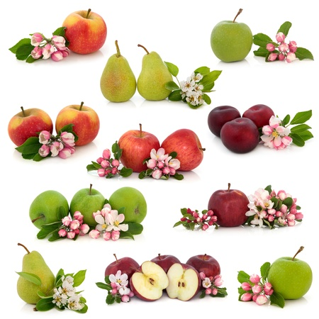 Large collection of apple, pear and plum fruit with corresponding flower blossom and leaf sprigs isolated over white background.