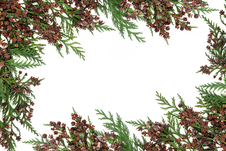 Photo pour Cedar cypress  abstract border with pine cones over white background. - image libre de droit