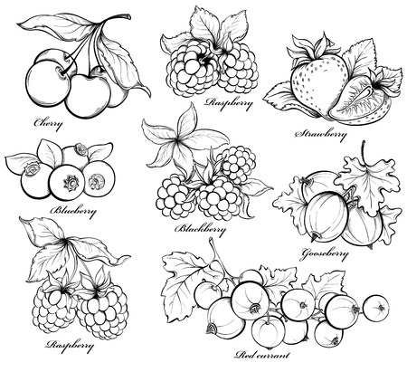 Illustration for Collection of hand drawn berries isolated on white background.  - Royalty Free Image