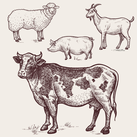 Illustration for Vector illustration?set poultry - cow, sheep, pig, goat. A series of farm animals. Graphics drawing. Vintage engraving style. Nature. Sketch. Isolated farm animals on white background. - Royalty Free Image
