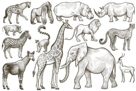Illustration pour Animals of Africa. Elephant, giraffe, zebra, lion, hippo, rhino, antelope, hyena, okapi, cheetah, gorilla, warthog, lemur. Illustration Vector Art. Vintage engraving. Hand drawing. Black and white. - image libre de droit