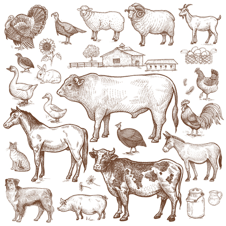 Illustration pour Vector large set  farm theme. Animals cattle, poultry, pets, landscape. Objects of nature isolated on white background. Drawings for text illustration, decoupage, design covers, signage, posters. - image libre de droit