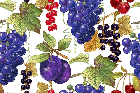 Ilustración de A Seamless botanical pattern with grapes, plum, red and black currant, cherry on white background. Vintage. Victorian style. Vector illustration. For kitchen design, food packaging, paper, interior - Imagen libre de derechos