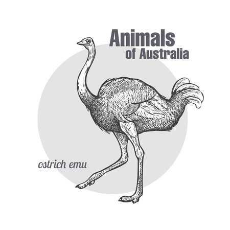 Ilustración de Ostrich Emu bird hand drawing. Animals of Australia series. Vintage engraving style. Vector illustration art. Black and white. Object of nature naturalistic sketch. - Imagen libre de derechos