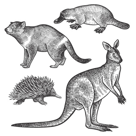 Illustration pour Tasmanian devil, platypus, wallaby or kangaroo, echidna hand drawing set. Animals of Australia series. Vintage engraving style. Vector art illustration. Black and white. Object of naturalistic sketch. - image libre de droit