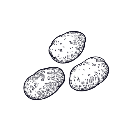Ilustración de Potatoes. Hand drawing of vegetable. Vector art illustration. Isolated image of black ink on white background. Vintage engraving. Kitchen design for decoration recipes, menus, sign shops, markets. - Imagen libre de derechos