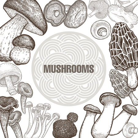 Illustration pour Poster with variants of old engraving mushroom vintage template for the cover or signboard of shop, market, packaging design, and advertising. - image libre de droit
