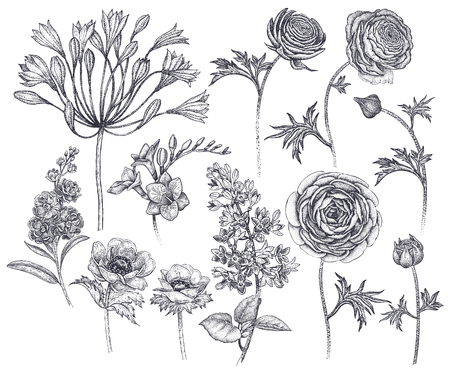 Illustration for Spring flowers isolated set. Hand drawing African lily, ranunculus, anemones, lilac, freesia, violet black ink on white background. Vector illustration art floral design. Vintage engraving - Royalty Free Image