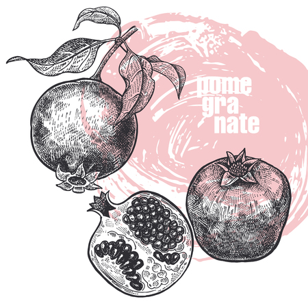 Illustration pour Pomegranate. Realistic vector illustration of fruit isolated on white background. Hand drawing sketch. Design for package of health and beauty natural products. Vintage black and white engraving - image libre de droit