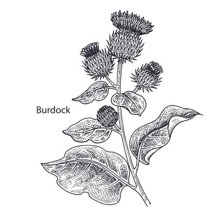 Ilustración de Realistic medical plant Burdock. Vintage engraving. Vector illustration art. Black and white. Hand drawn of flower. Alternative medicine series. - Imagen libre de derechos