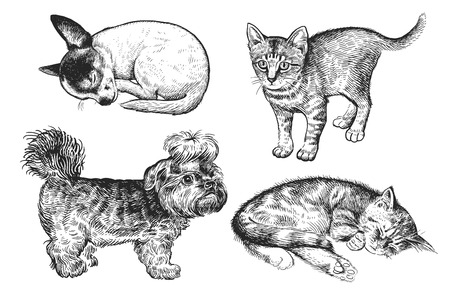 Illustration pour Cute puppies and kittens set. Home pets isolated on white background. Sketch. Vector illustration art. Realistic portraits of animal. Vintage. Black and white hand drawing of dogs and cats. - image libre de droit