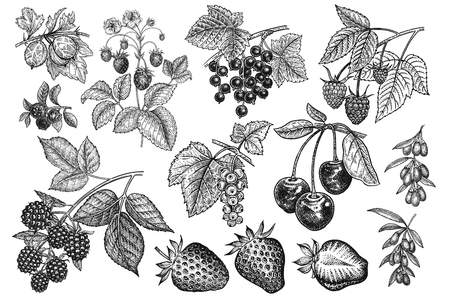 Illustration for Berries big set. Realistic strawberries, cherries, raspberries, blackberries, goji, currants, blueberries, gooseberries isolated on white background. Hand drawing. Vintage. Black and white. Vector. - Royalty Free Image