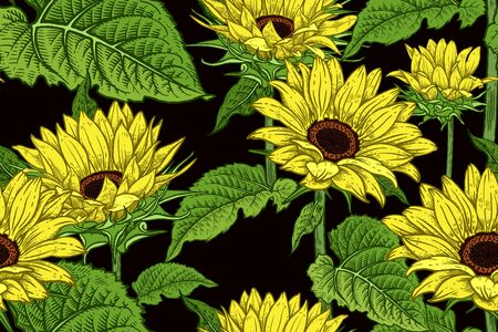 Illustration for Sunflowers. Floral seamless pattern. Flowers and leaves. Vector illustration. Vintage. Hand realistic drawing. Decorative background to create paper, wallpaper, summer textile. - Royalty Free Image
