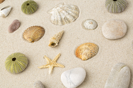 Foto de Sea shells and star fish on the sand - Imagen libre de derechos