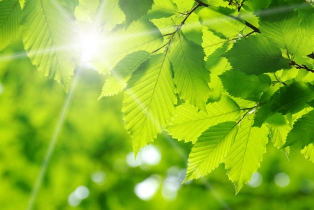 Photo pour green leaves on the green backgrounds  - image libre de droit