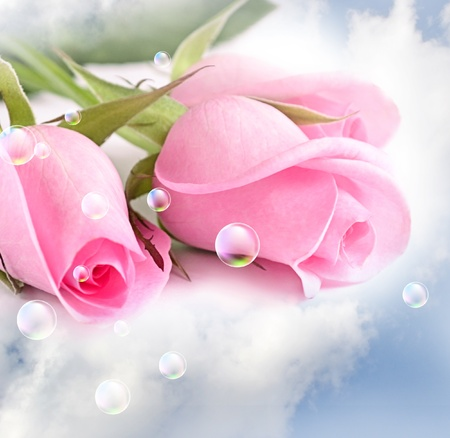 Photo for Three pink roses in the clouds - Royalty Free Image