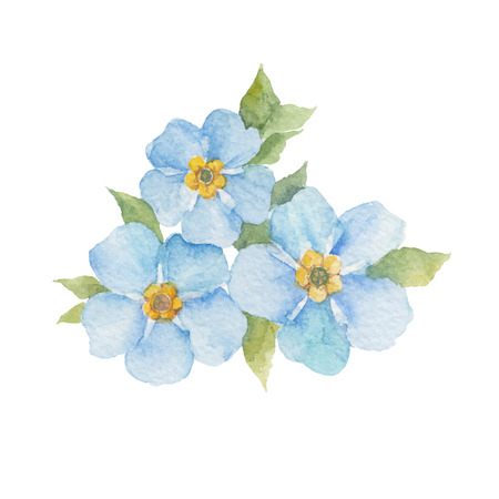 Illustration pour Forget-me-not flowers isolated on white background. watercolor hand drawn illustration. - image libre de droit