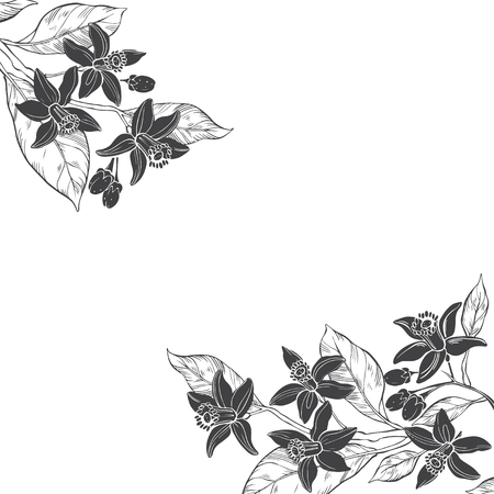 Illustration pour Floral background with hand-drawn branches of flowers neroli. Vector illustration on white background with place for text. Invitation, greeting card or an element for your design. - image libre de droit