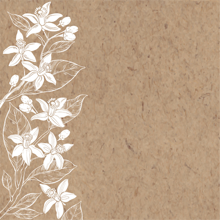Illustration pour Floral background with hand-drawn branches of flowers neroli - image libre de droit