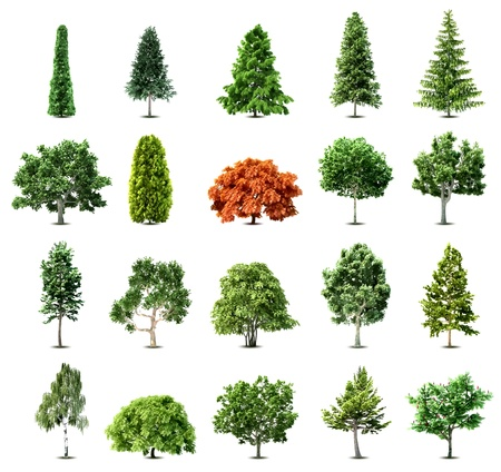 Illustration for Set of trees isolated on white background  - Royalty Free Image