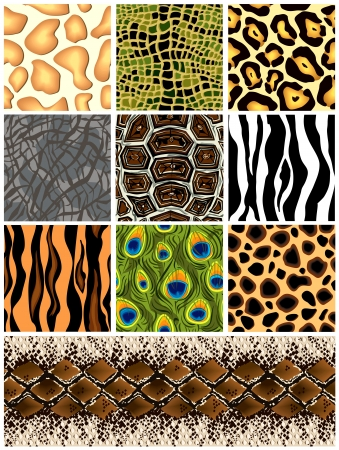 Set seamless patterns animals  Vector