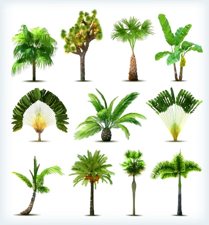 Illustration for Set of various palm trees. Vector illustration - Royalty Free Image